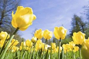 spring ahead